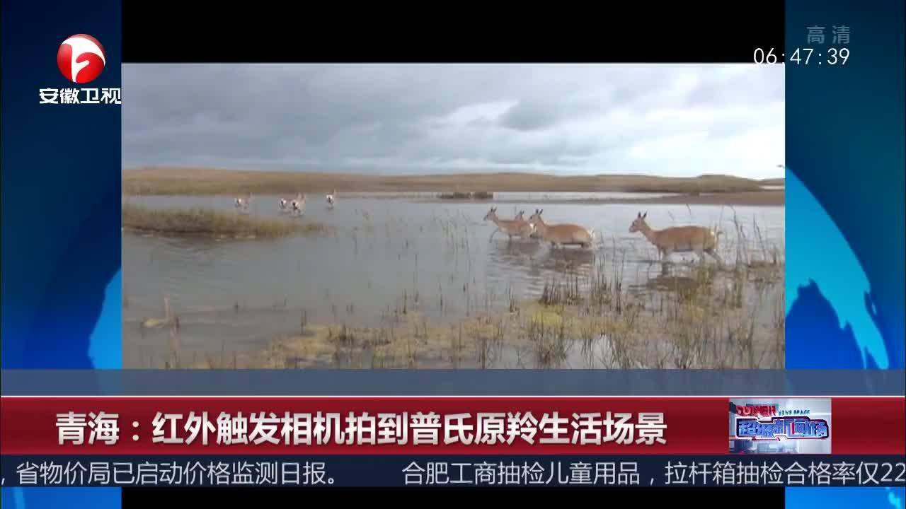 [视频]青海:红外触发相机拍到普氏原羚生活场景