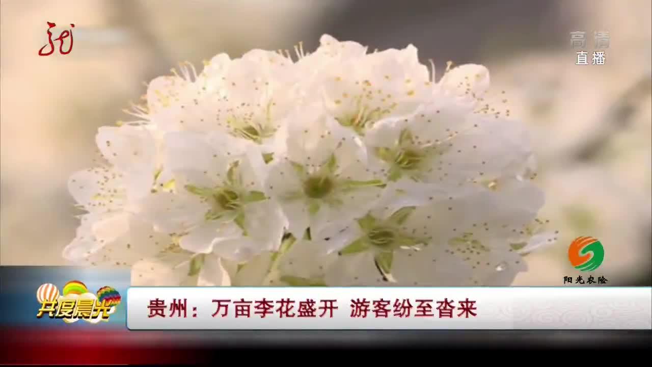 [视频]贵州:万亩李花盛开 游客纷至沓来
