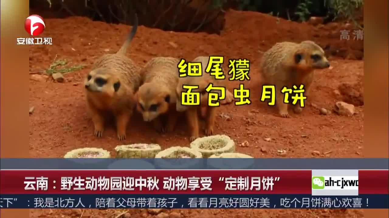 """[视频]云南:野生动物园迎中秋 动物享受""""定制月饼"""""""