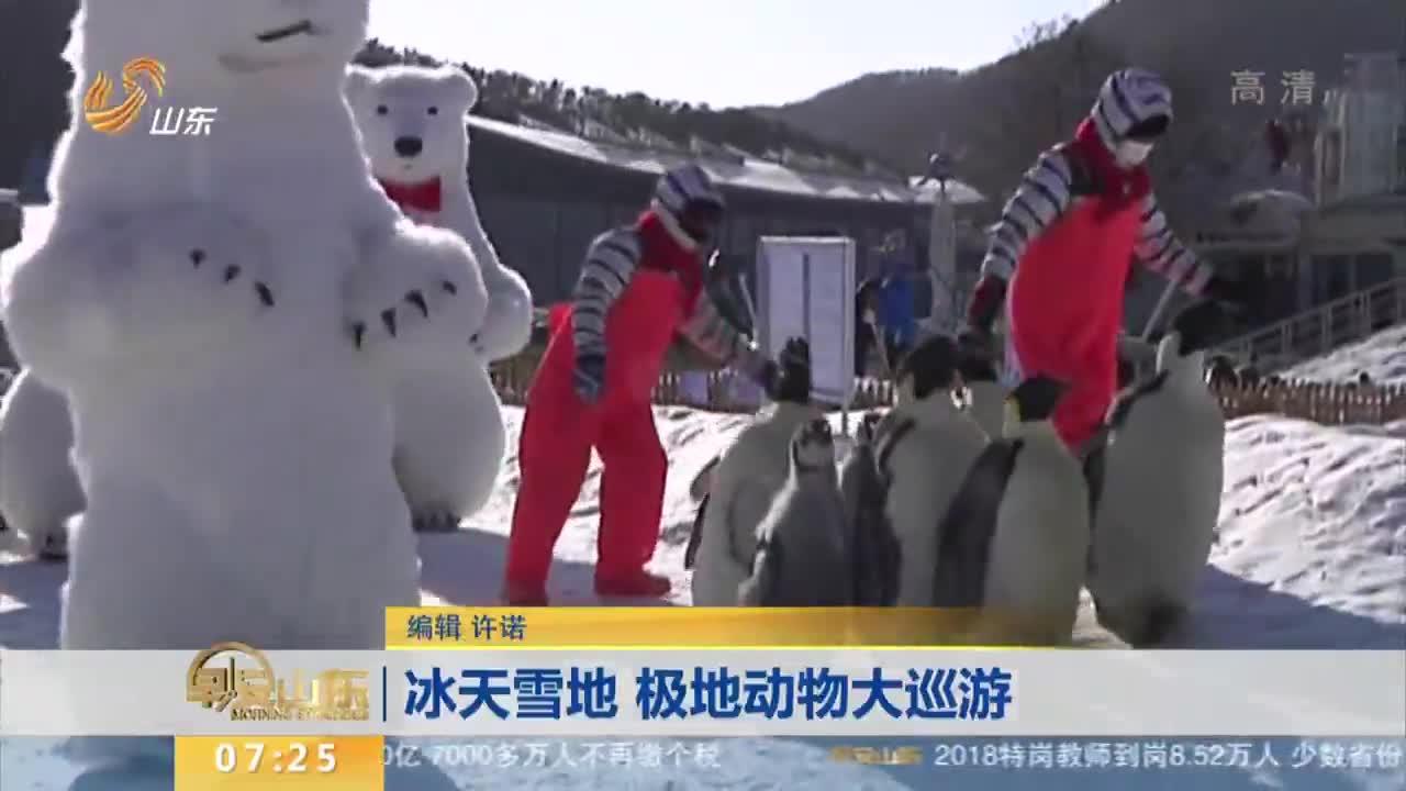 [视频]冰天雪地 极地动物大巡游