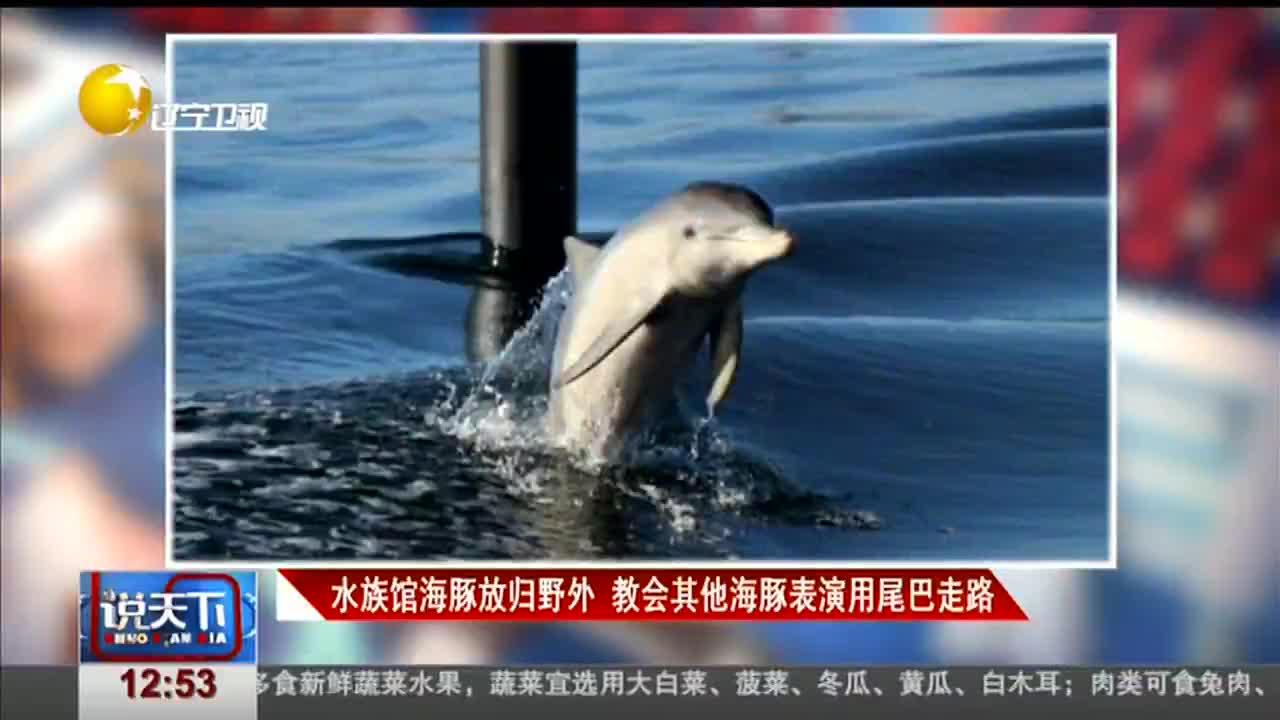 [视频]水族馆海豚放归野外 教会其他海豚表演用尾巴走路