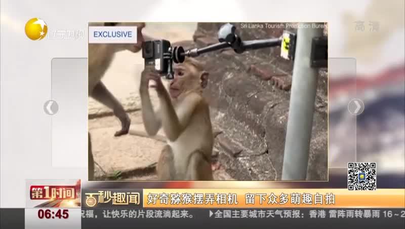 [视频]好奇猕猴摆弄相机 留下众多萌趣自拍