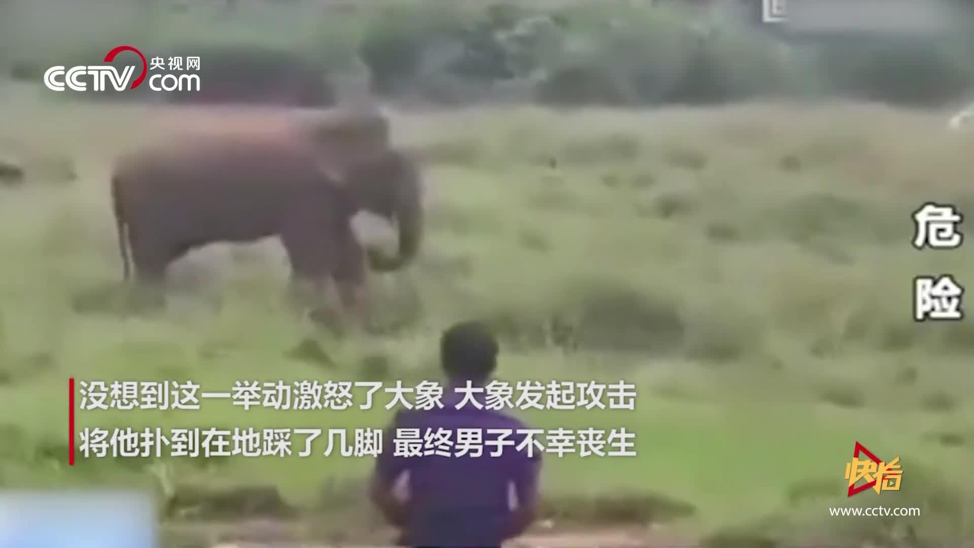 [视频]男子酒后到大象面前挑衅 下一秒直接被一脚踩死