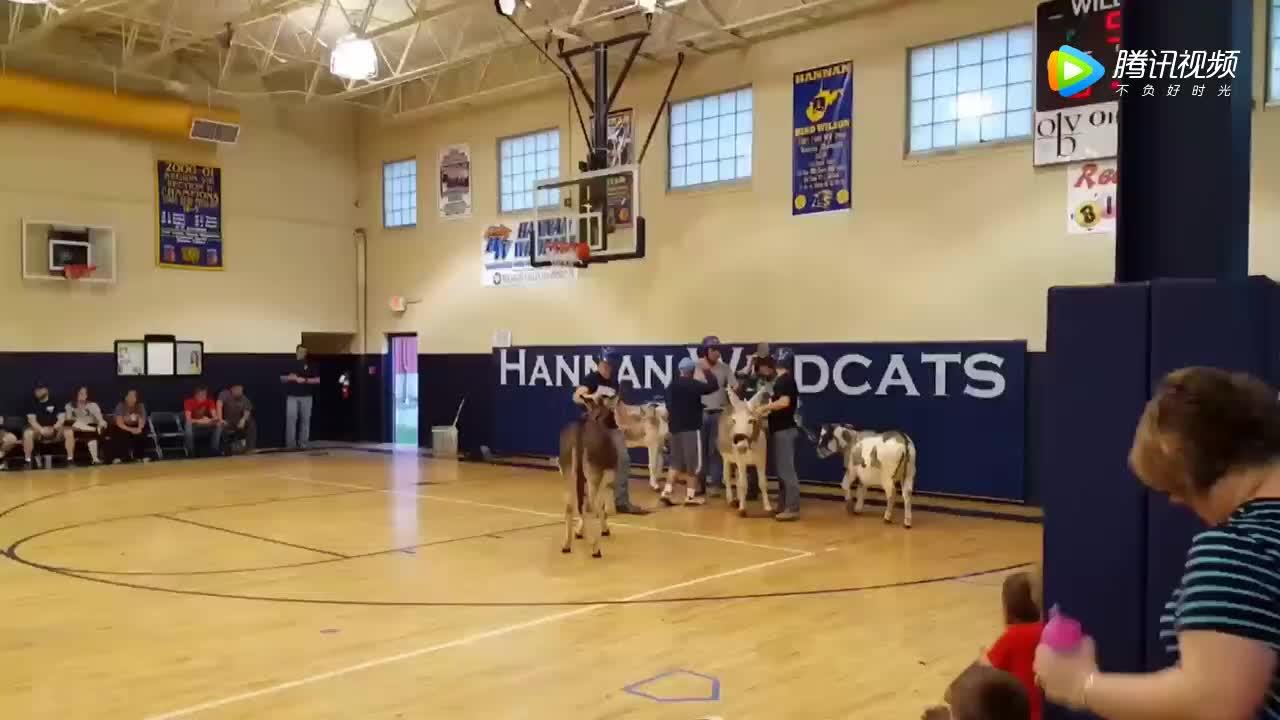 [视频]美国奇葩篮球赛:骑着毛驴打篮球
