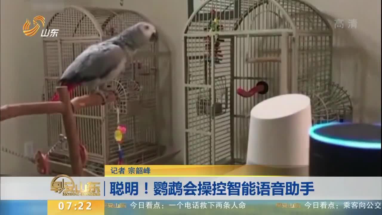 [视频]聪明!鹦鹉会操控智能语音助手