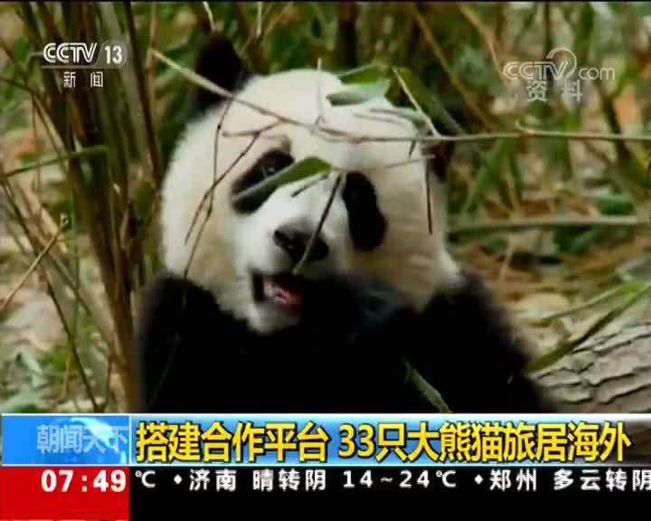 """[视频]大熊猫""""园园""""将启程旅居奥地利"""
