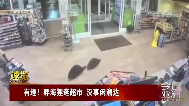[视频]有趣!胖海狸逛超市 没事闲溜达
