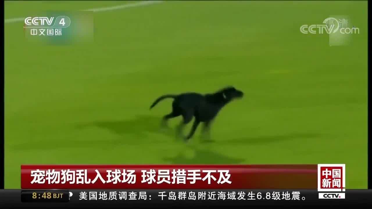 [视频]宠物狗乱入球场 球员措手不及
