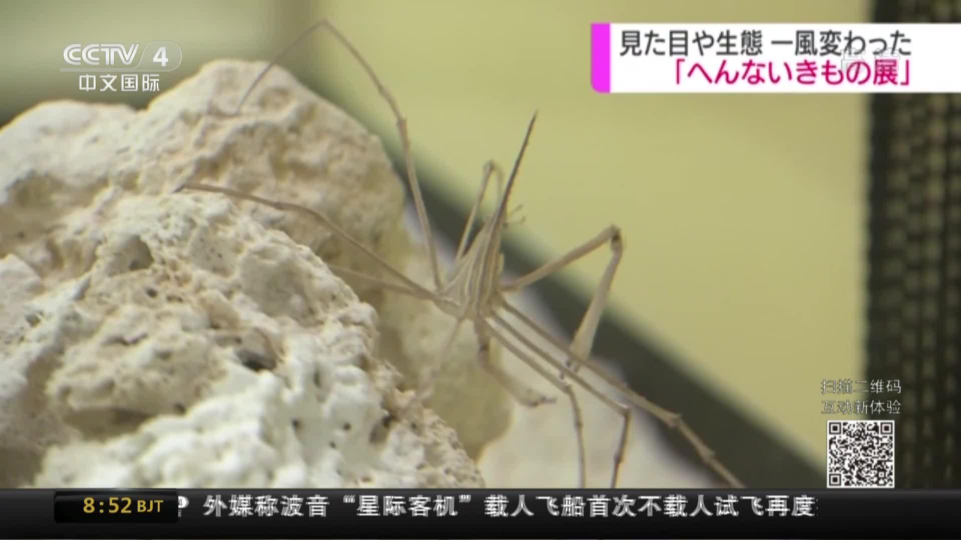 """[视频]日本举办""""神奇生物展"""" 千姿百态难得一见"""