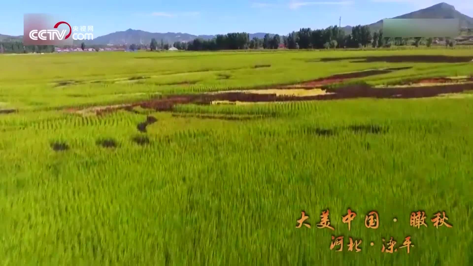 [视频]快来快来数一数,田野里有几种颜色?