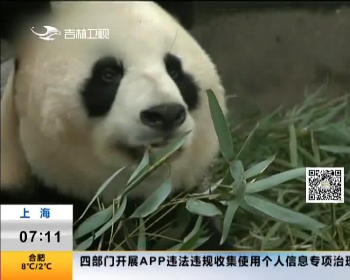[视频]上海野生动物园:可爱!动物宝宝扎堆亮相