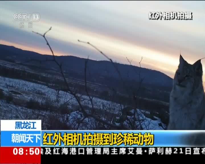 [视频]黑龙江:红外相机拍摄到珍稀动物