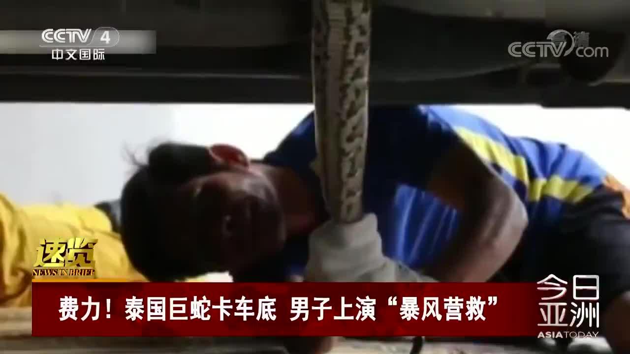 """[视频]泰国巨蛇卡车底 男子上演""""暴风营救"""""""