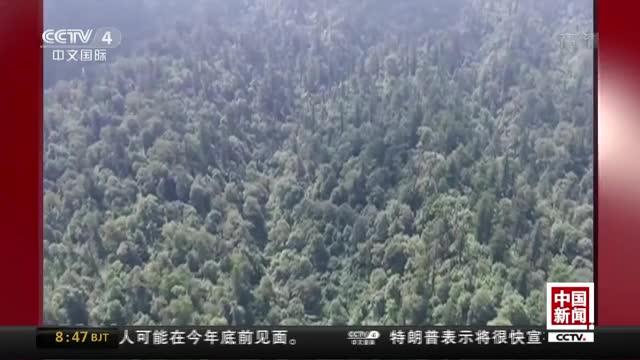 [视频]四川:野外发现大熊猫产子巢穴