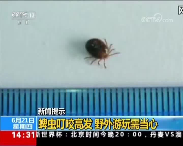 [视频]新闻提示:蜱虫叮咬高发 野外游玩需当心