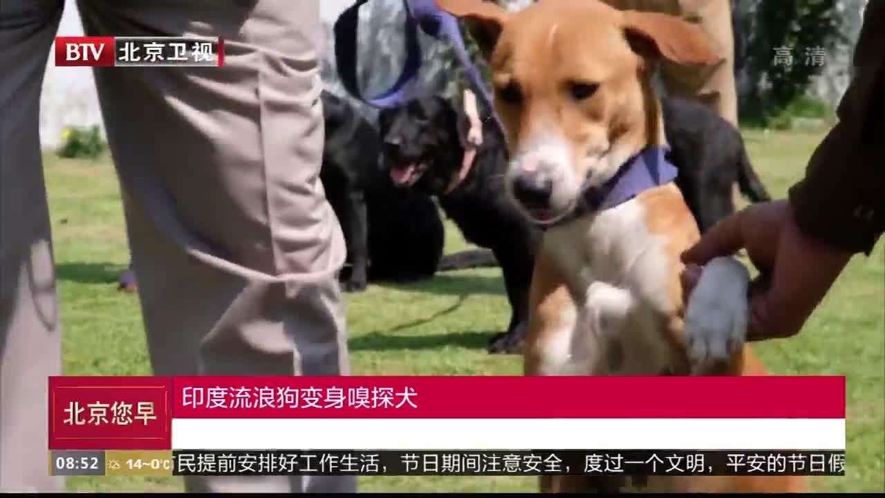 [视频]流浪狗遭欺负被警察救起 凭天赋变身嗅探犬