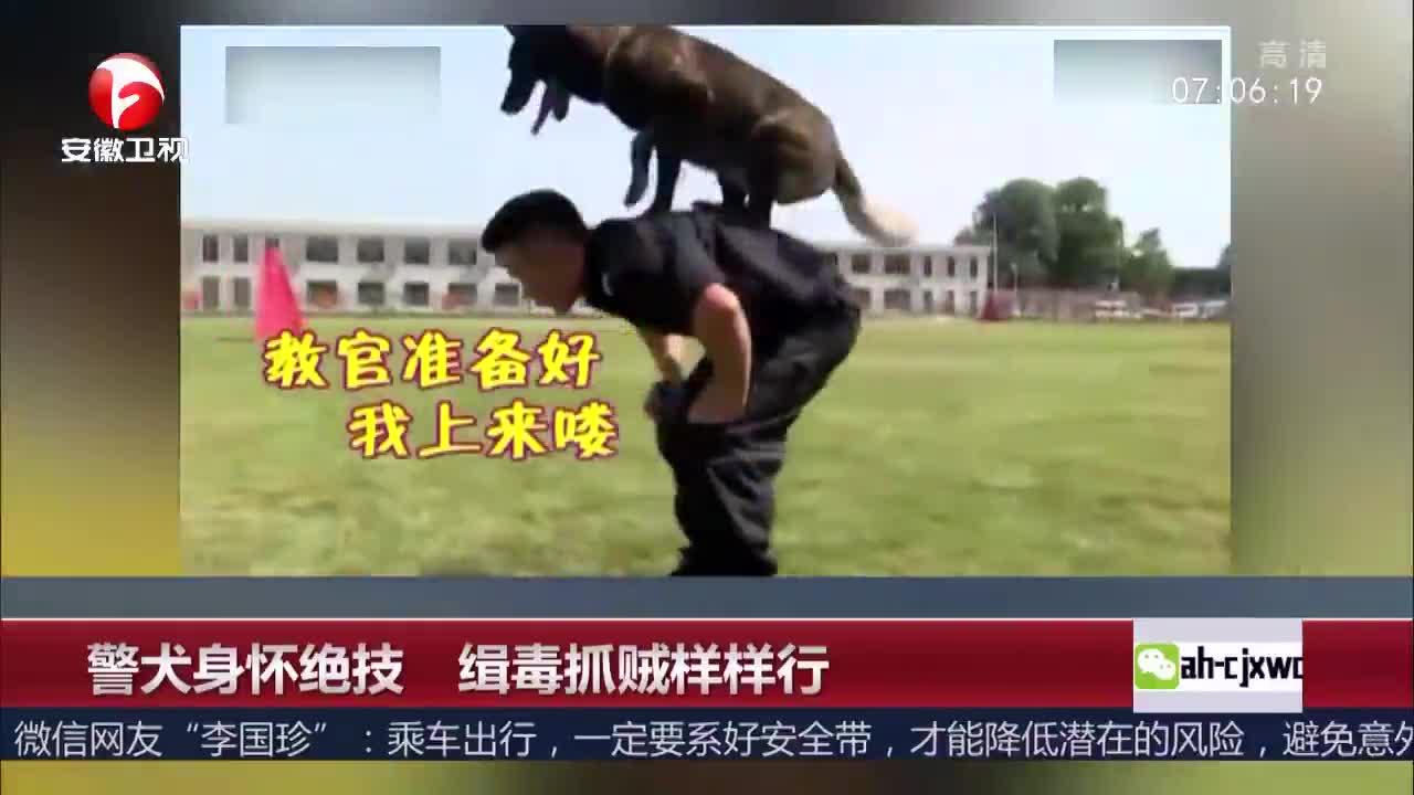 [视频]警犬身怀绝技 缉毒抓贼样样行