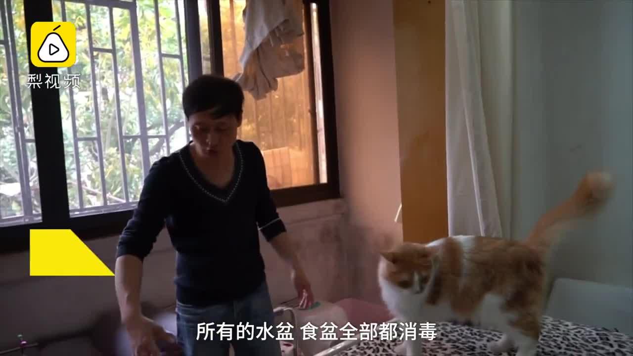 """[视频]被女儿带动!54岁""""猫爸""""喂流浪猫6年"""