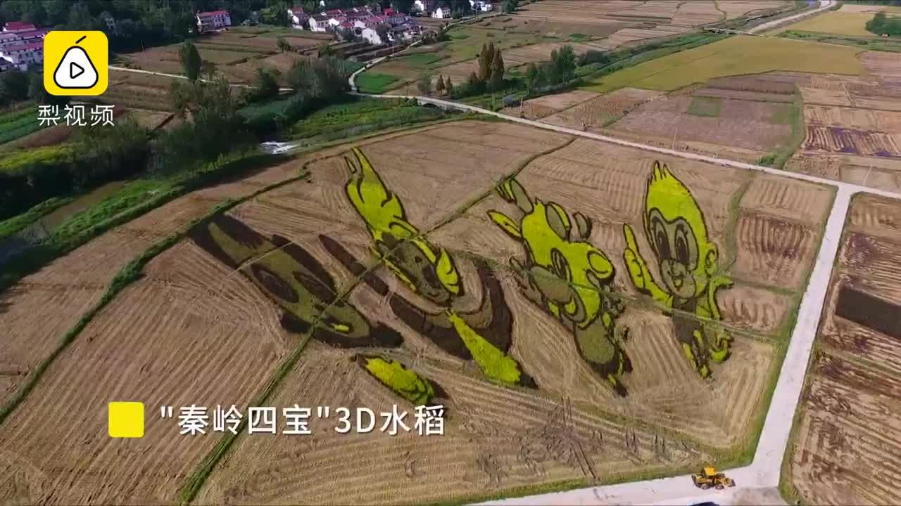 [视频]最美丰收图!稻田收割后还留一幅画
