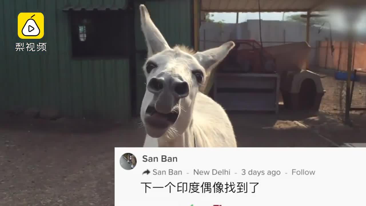 [视频]爆笑!2018年发生在国外的奇葩事