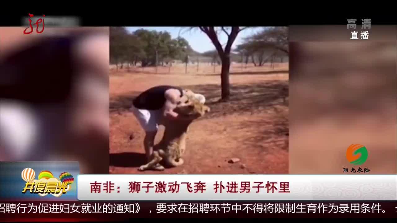 [视频]南非:狮子激动飞奔 扑进男子怀里
