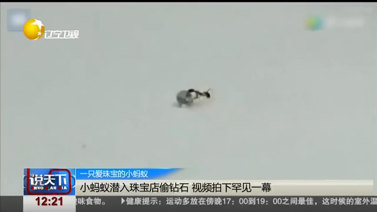 [视频]小蚂蚁潜入珠宝店偷钻石 视频拍下罕见一幕
