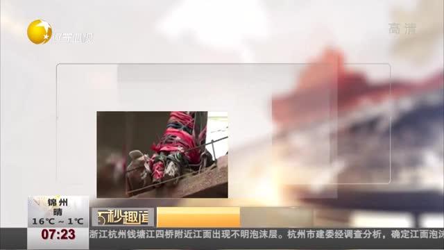 """[视频]居民在阳台挂上百面镜子 称对面宿舍楼""""妖气太重"""""""