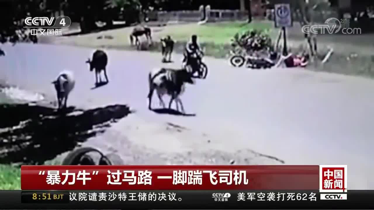 """[视频]""""暴力牛""""过马路 一脚踹飞司机"""