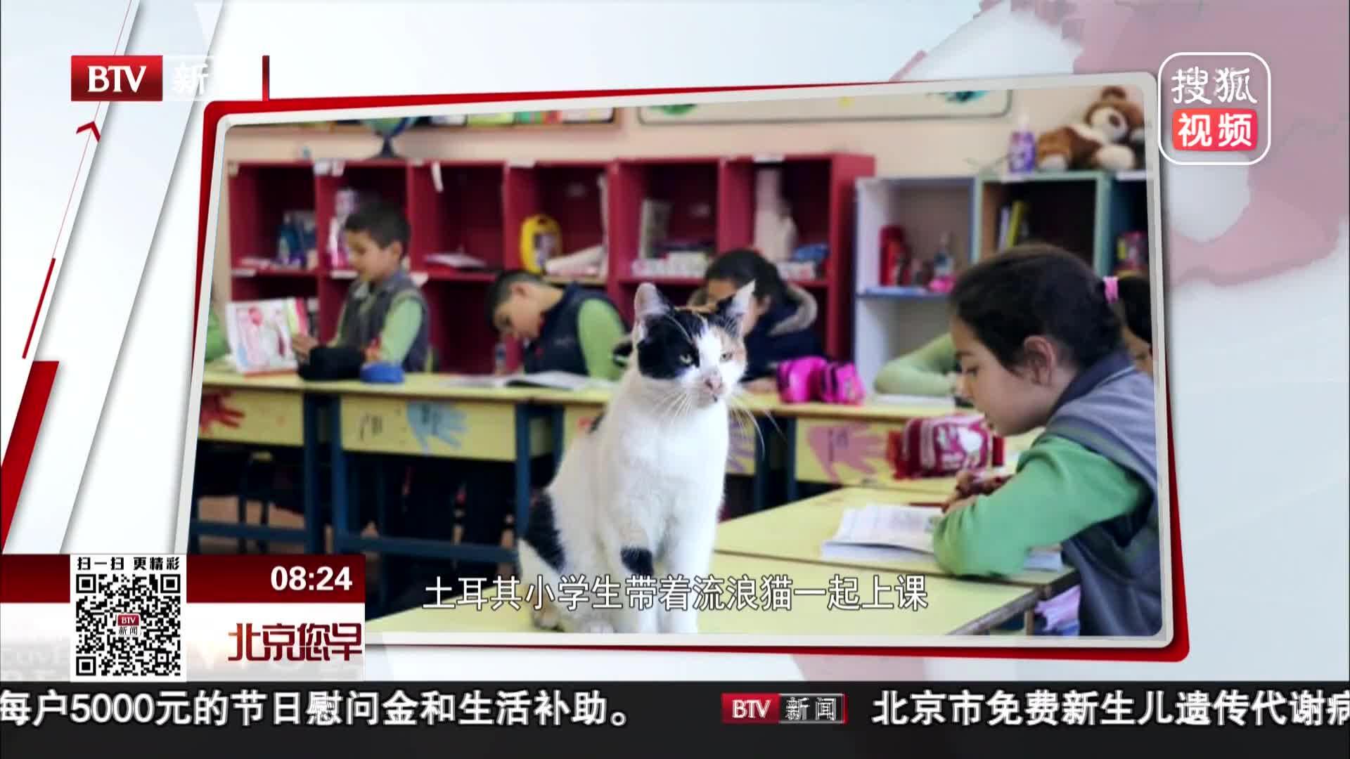 [视频]土耳其小学生带着流浪猫一起上课