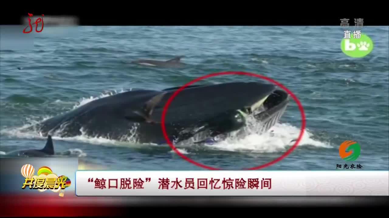 """[视频]""""鲸口脱险""""潜水员回忆惊险瞬间"""