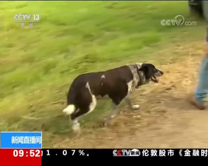 [视频]澳大利亚:忠犬护走失幼主 寒夜不离不弃