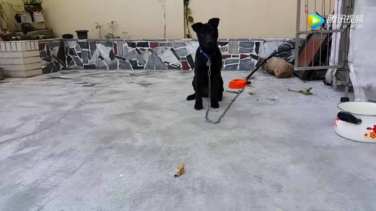 [视频]世界上三种最忠诚的狗 中华田园犬上榜