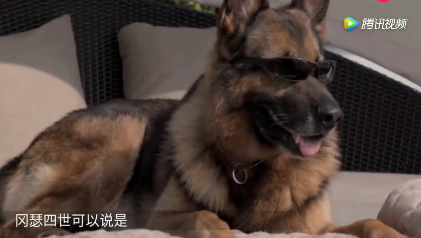 """[视频]继承上亿家产的""""霸道总狗"""""""