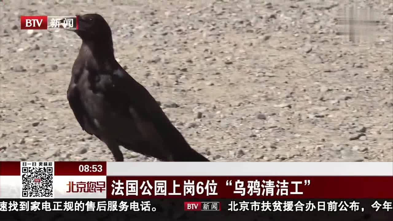 """[视频]法国一主题公园部署6位""""乌鸦清洁工"""""""