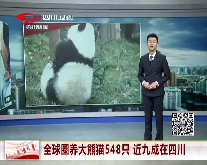 [视频]全球圈养大熊猫548只 近九成在四川