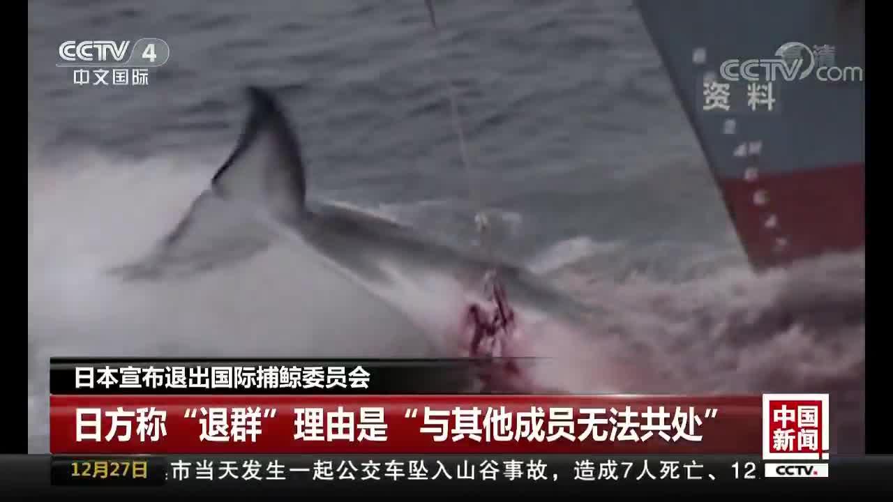 [视频]日本宣布退出国际捕鲸委员会