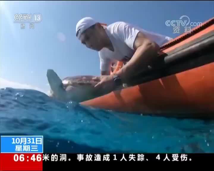 [视频]农业农村部:集中放归大批救助海龟