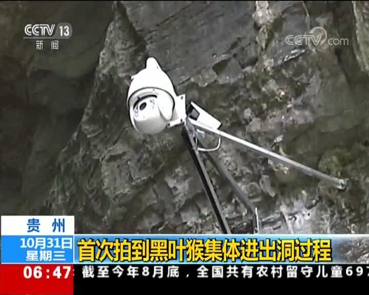 [视频]贵州:首次拍到黑叶猴集体进出洞过程