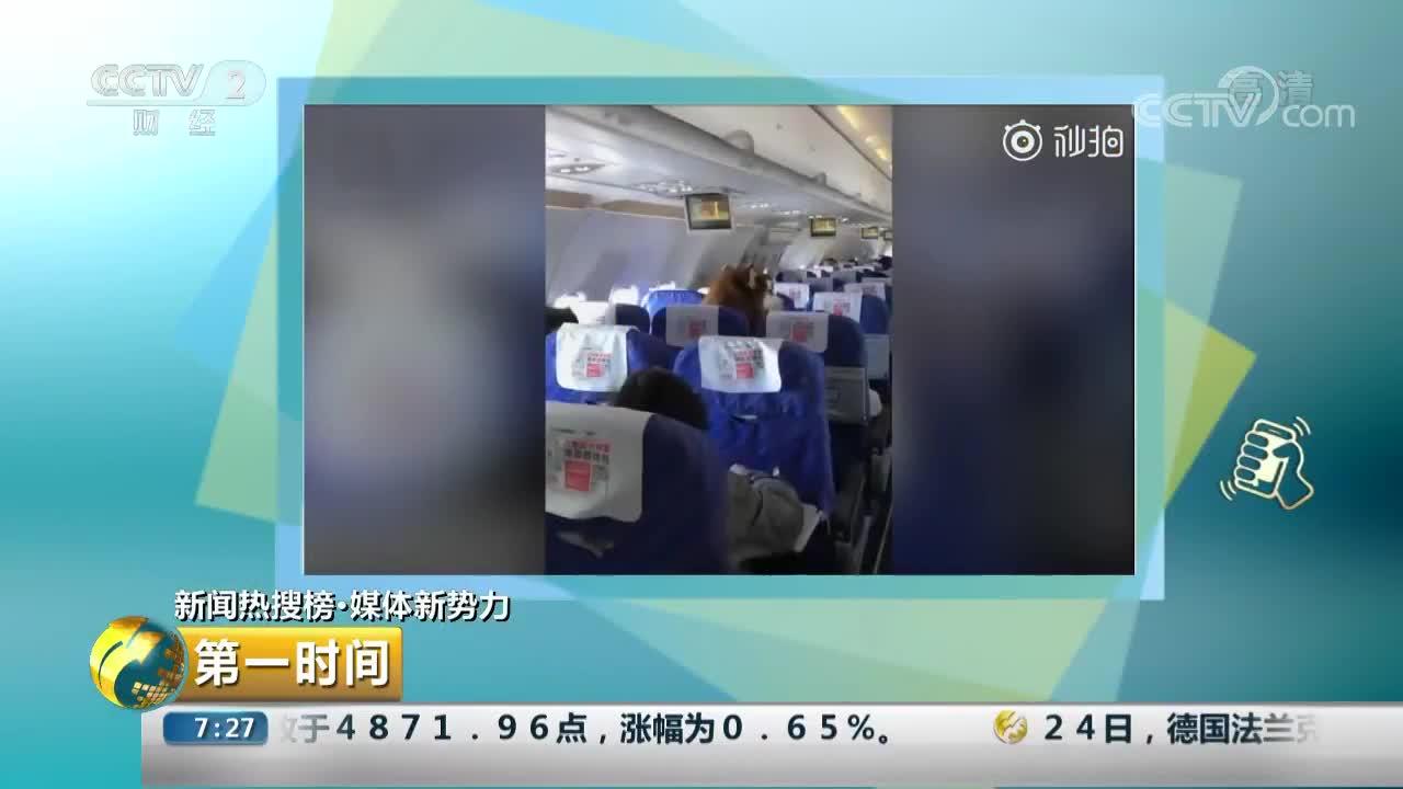 [视频]大型犬现身民航客舱引发关注