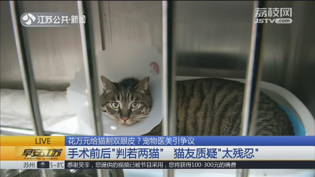 [视频]花万元给猫割双眼皮?宠物医美引争议