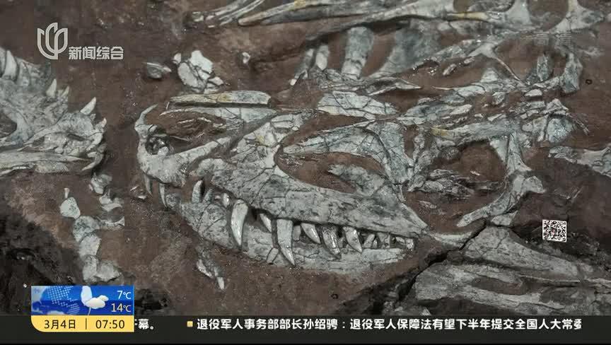 """[视频]山西""""85后""""化石修复师 耗3年让2.3亿年前""""神兽""""重现"""