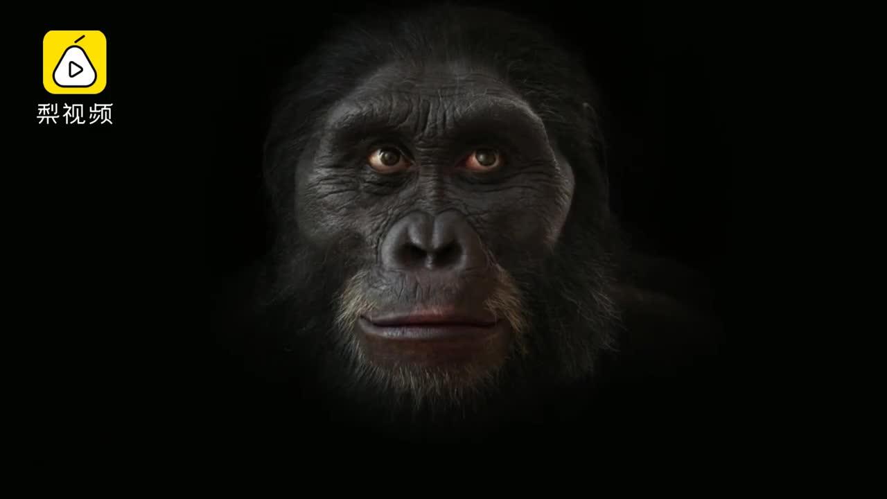[视频]人类600万年样貌演化史 用140秒了解一下