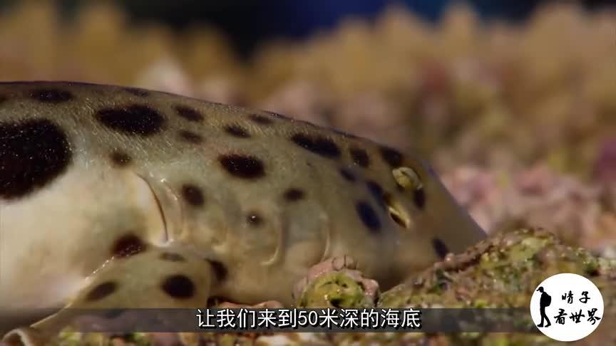 [视频]会行走的鲨鱼 离开水也能存活