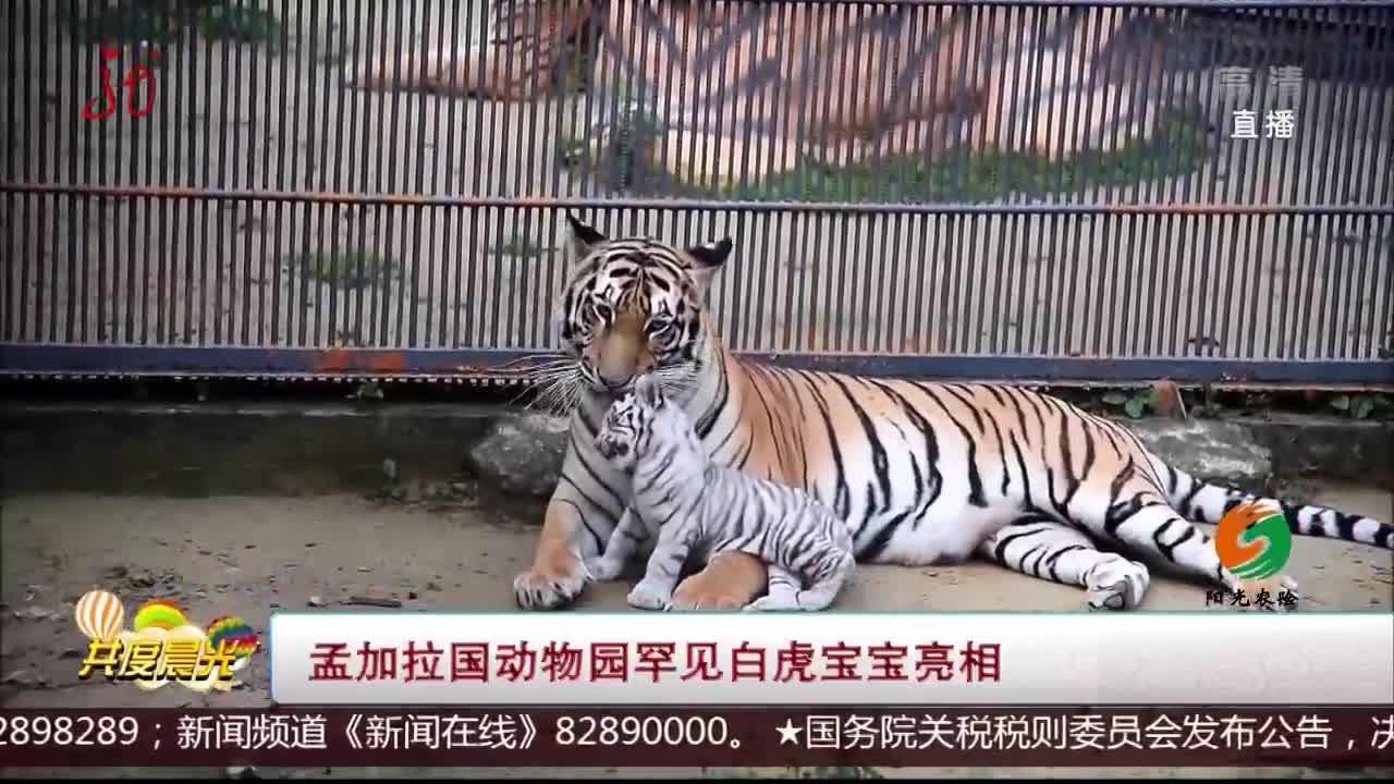 [视频]孟加拉国动物园罕见白虎宝宝亮相