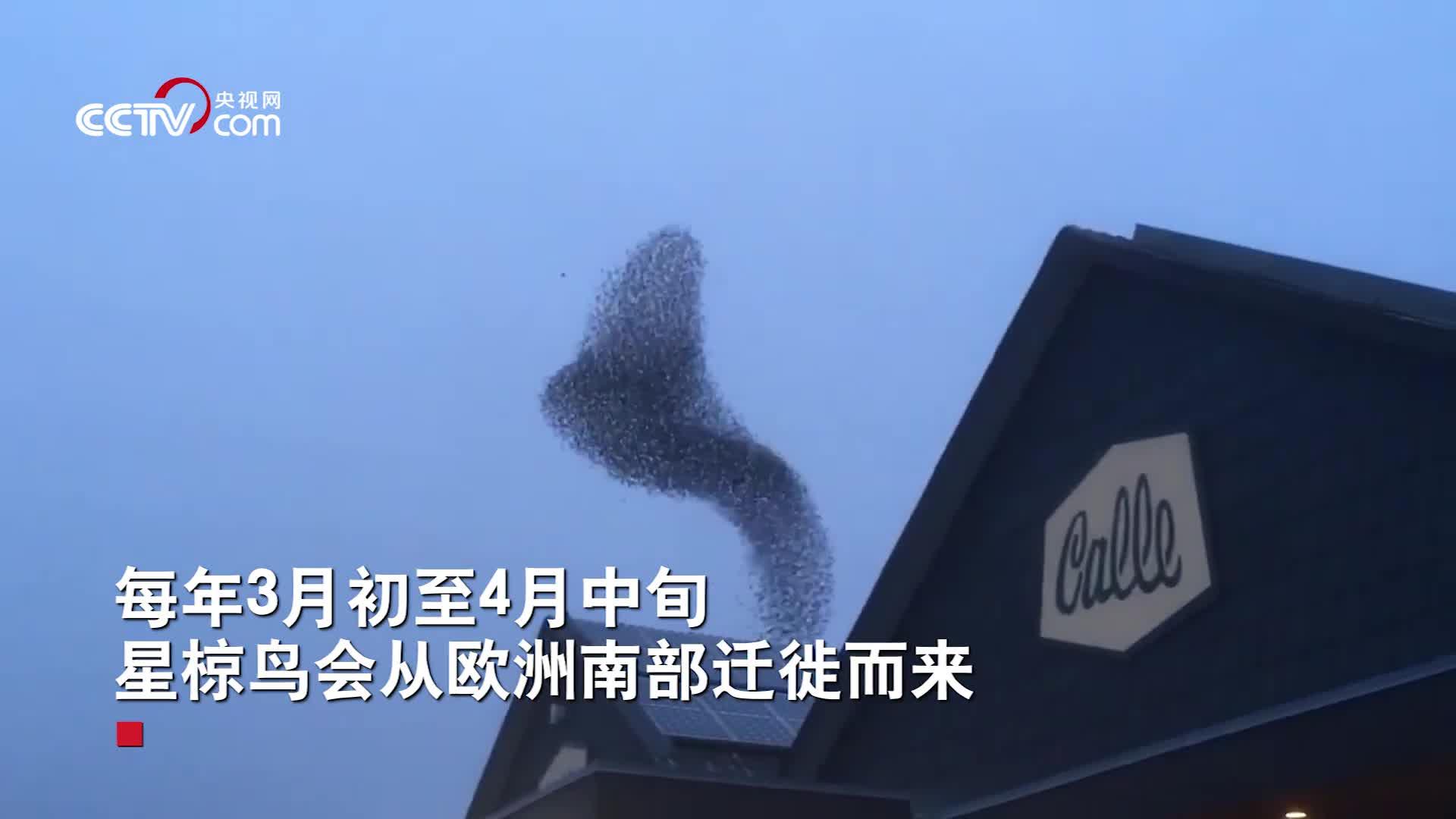 """[视频]丹麦再现""""黑太阳""""现象 鸟儿空中有序编队 变化神奇图案"""