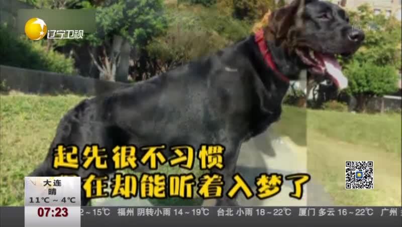 """[视频]狗狗鼾声如""""机枪扫射"""" 主人以为有人在打仗"""