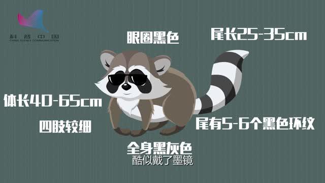 [视频]科学博士讲解浣熊与小熊猫的区别