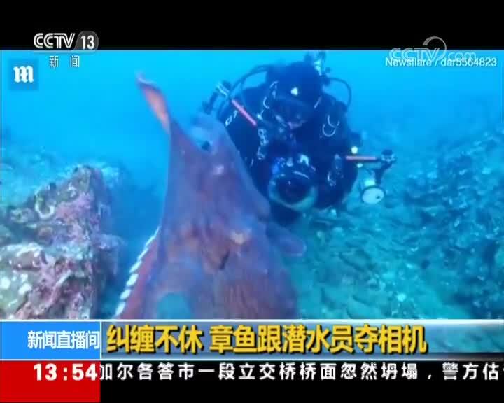 [视频]纠缠不休 章鱼跟潜水员夺相机