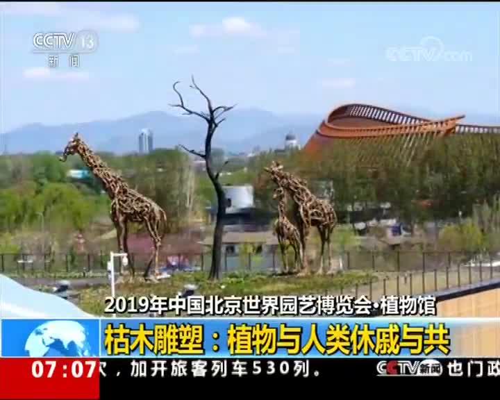 [视频]魅力世园会:植物馆枯木雕塑完美展示植物与人类休戚与共