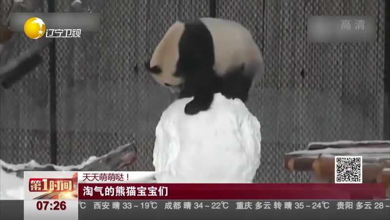 [视频]天天萌萌哒! 淘气的熊猫宝宝们